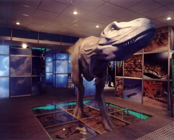 Stands in exhibition halls